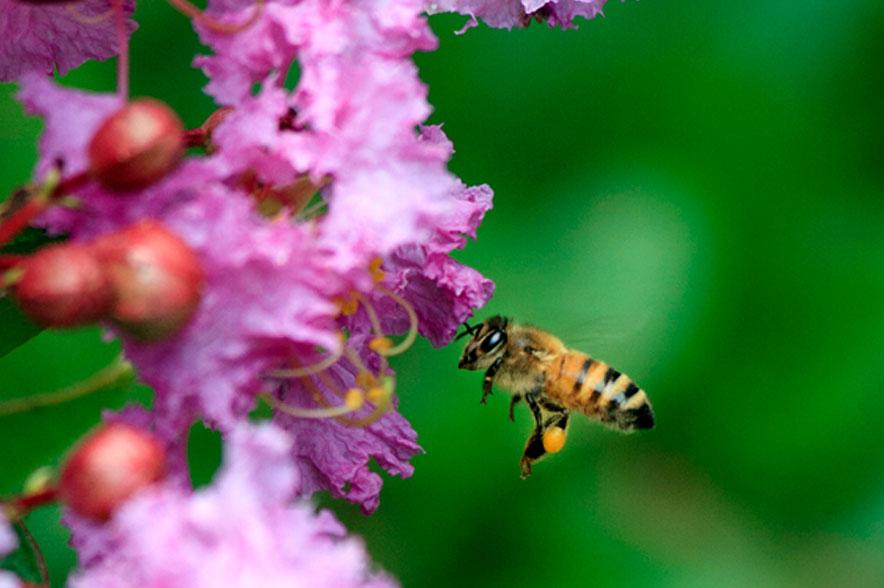bees sfw - Metanoia