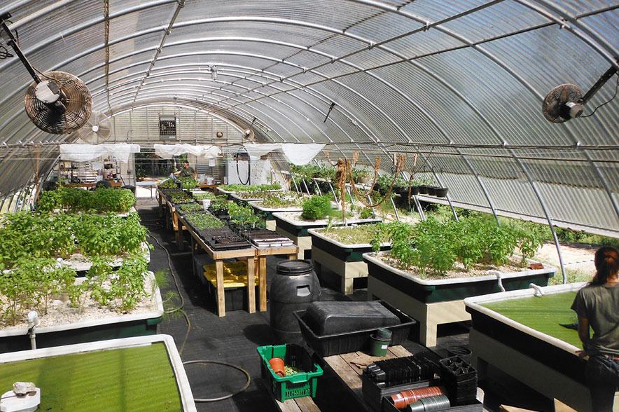hydroponics sfw - Metanoia